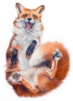 Realistische zeichnung eines fuchses auf einem weißen hintergrund. lustiger fuchs lügt und lächelt