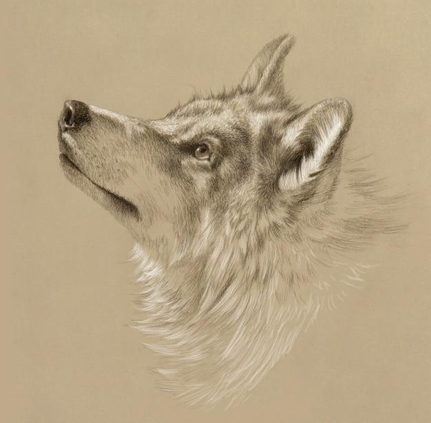 Realistische zeichnung eines wolfskopfes. bleistiftzeichnung auf getöntem papier.