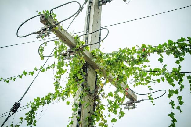 Reben an elektrischen stangen und stromleitungen.