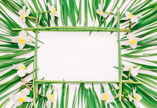 Rechteckiger mit blumenrahmen von gelben blumen von narzissen und von grünblättern auf weiß