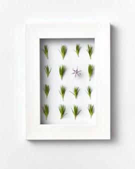 Rechteckiger öko-rahmen mit nadeln junger kiefernzweige und einer frühlingsblume auf einer hellgrauen wand. platz für text. draufsicht.