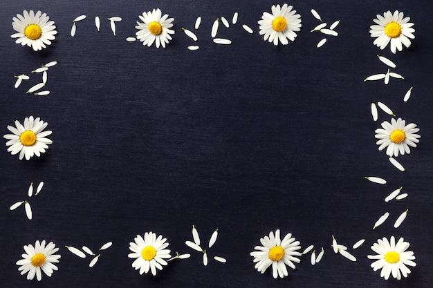 Rechteckiger rahmen aus weißen gänseblümchen auf schwarzem hintergrund,