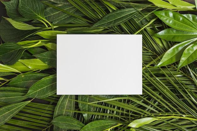 Rechteckiger weißer rahmen über grünen blättern