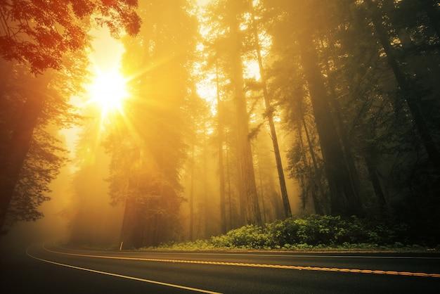 Redwood nebeliger sonnenuntergang