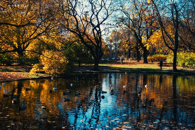 Reflexion der schönen bäume und des blauen himmels in einem see