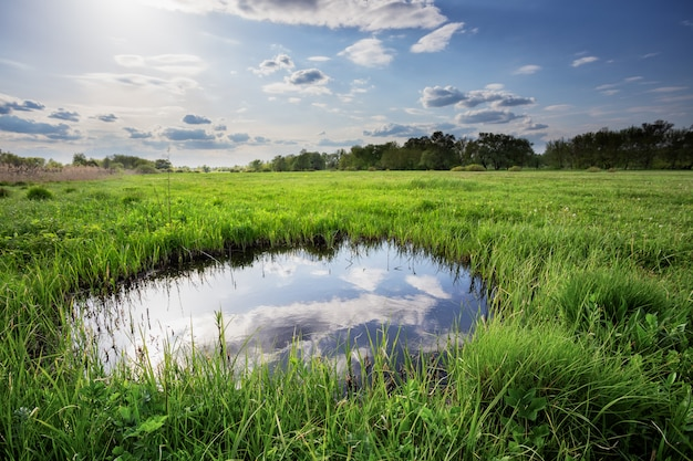 Reflexion der wolken und des blauen himmels im kleinen see unter grünem gras