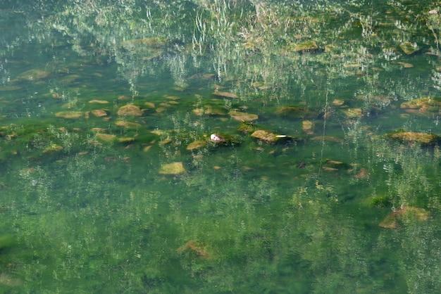 Reflexion von klarem wasser und unterwasserlebewesen