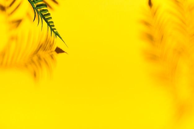 Reflexion von palmzweigen
