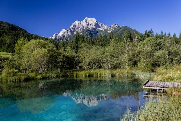 Reflexionen in einem kleinen see im naturschutzgebiet zelenci in slowenien