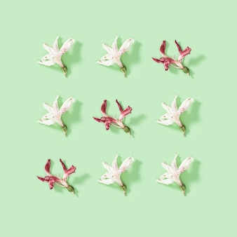 Regelmäßiges kreatives muster der grußkarte von natürlichen trockenen weißen und roten blumenalstroemerien. blumendesign.