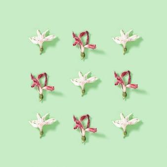 Regelmäßiges kreatives muster von trockenen weißen blumenalstroemeria auf weichem grün.