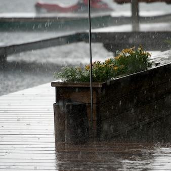 Regen, der auf hölzernen plattform- und blumentopf see des holzes, ontario fällt