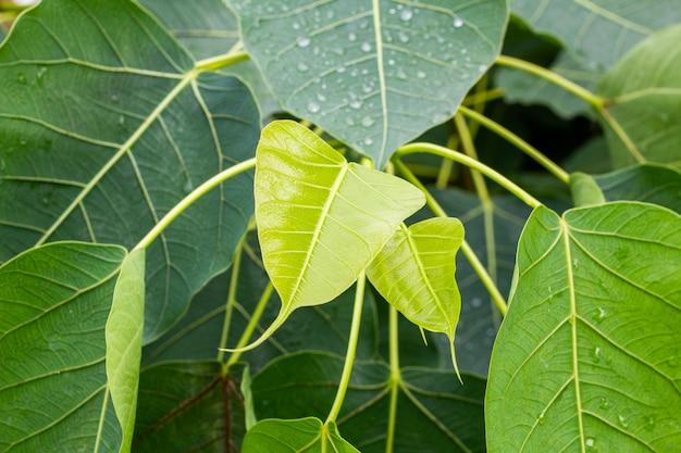 Regen fällt auf die oberseite der blätter in der regenzeit