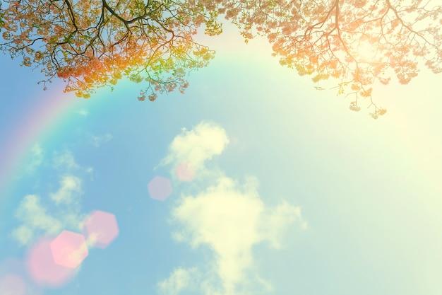 Regenbogen im himmel mit blauem himmel