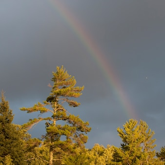 Regenbogen im himmel über see des holzes, ontario