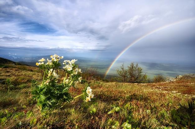 Regenbogen in den bergen. landschaft mit sommerblumen.