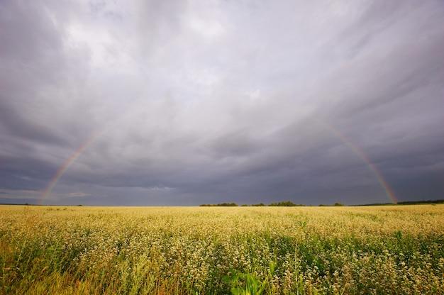 Regenbogen ländliche landschaft mit weizenfeld