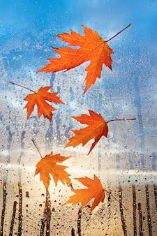 Regentageswetter. ahornrotes blatt auf glas mit natürlichen wassertropfen. gefallene blätter am nassen fenster