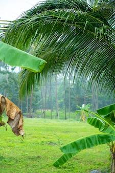 Regenwald am regnerischen tag. tropisches inselwetter.