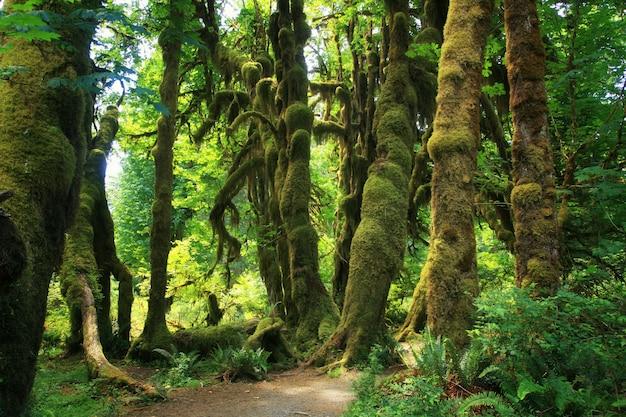 Regenwald im olympischen nationalpark