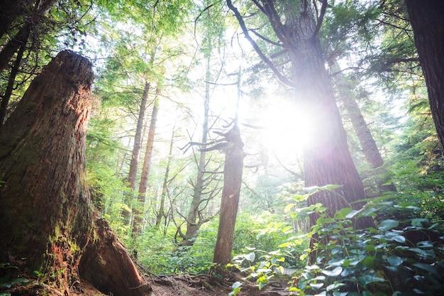 Regenwald mit dichter vegetation