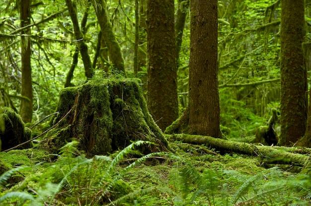 Regenwald thema