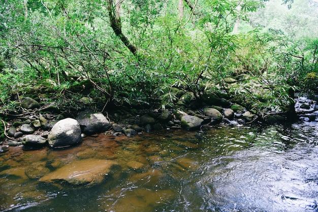 Regenwalddschungel mit felsen und grünem mos im wilden tropischen wald. gebirgsflussstromwasserfallgrünbaum-landschaftsnatur