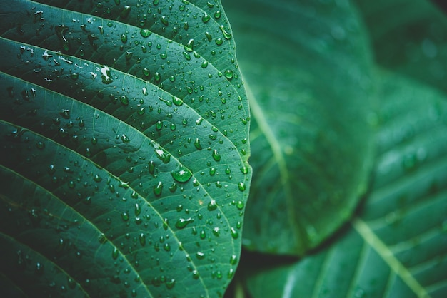 Regenwasser auf einem grünen blattmakro.