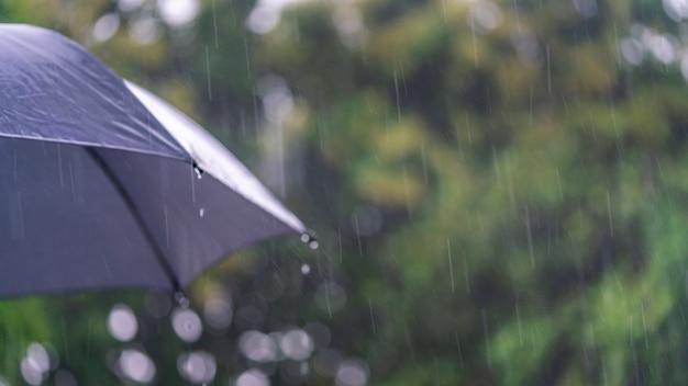 Regenzeit mit schwarzem regenschirm