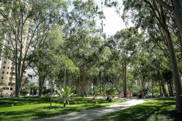 Registrierung des öffentlichen baumerbes auf gehwegen, blumenbeeten, plätzen und grünflächen
