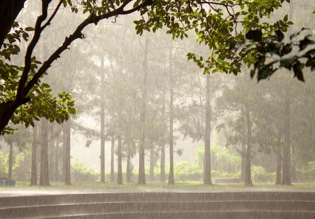 Regnerischer tag auf einem park bei brasilien. regen über den bäumen.