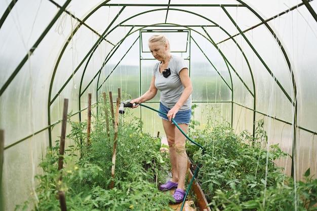 Reife ältere frau, die pflanzen mit wasserschlauch wässert. landwirtschaft, gartenarbeit, landwirtschaft, alter und menschenkonzept