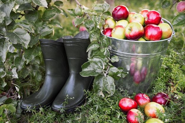 Reife äpfel in eimer gummistiefeln auf grünem gras