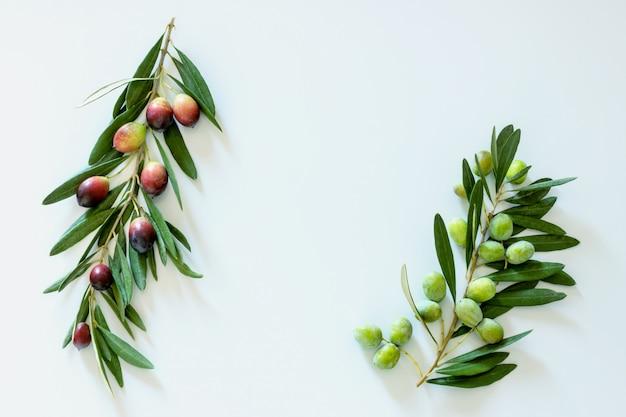 Reife bunte dunkle und grüne oliven auf einem zweig. speicherplatz kopieren.
