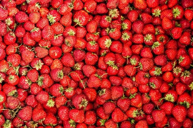 Reife erdbeere im garten