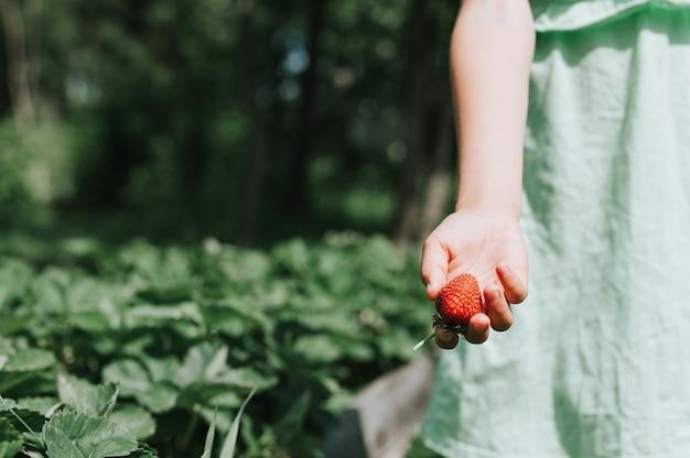 Reife erdbeere in der hand eines kindermädchens