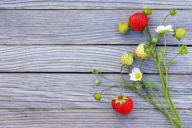 Reife erdbeeren auf blühendem zweig auf einem hölzernen hintergrund