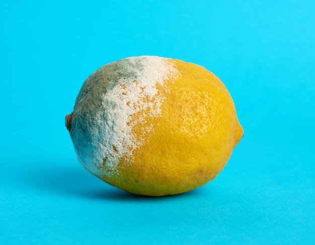 Reife gelbe zitrone mit schimmel auf blauem hintergrund, nahaufnahme