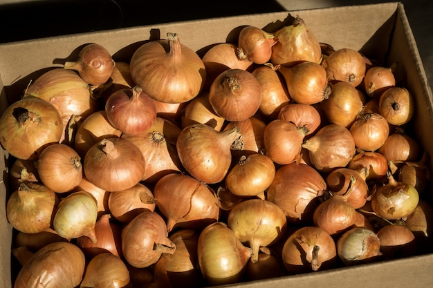Reife goldene zwiebeln in einem karton.