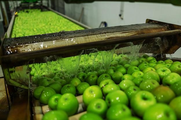 Reife grüne äpfel frisch gewaschen im fokus. der prozess der produktion, sortierung und verteilung von äpfeln. äpfel in fließendem wasser in einem automaten in der verarbeitenden industrie reinigen