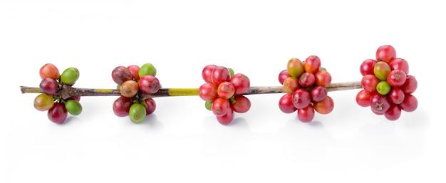 Reife kaffeebohnen auf weißem raum