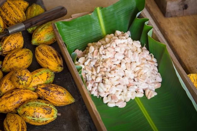 Reife kakaohülse und -bohnen eingerichtet auf rustikalem hölzernem hintergrund