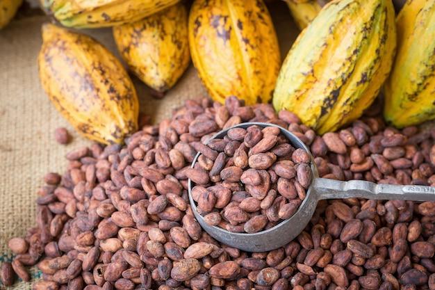 Reife kakaohülse und bohnen stellten auf rustikalen hölzernen hintergrund ein