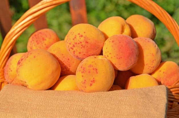 Reife reife aprikosen