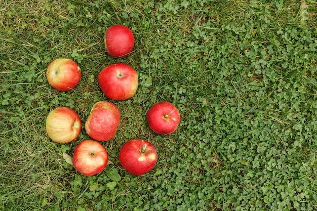 Reife rote äpfel auf dem grünen gras