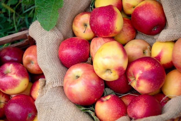 Reife rote äpfel im korb
