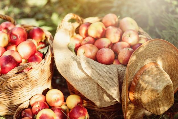 Reife rote äpfel in einem korb auf grünem gras