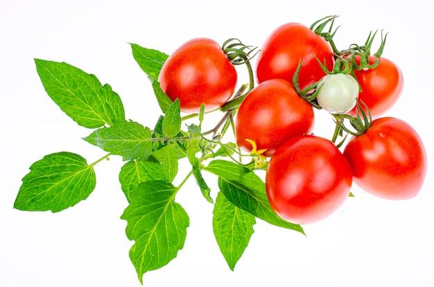 Reife rote tomaten mit zweigen und blättern auf weißer hintergrundnahaufnahme. studiofoto.
