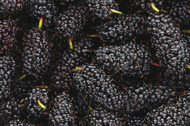 Reife und frische früchte der schwarzen maulbeere