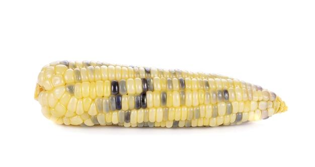 Reifer lila mais isoliert auf weiß isoliert.